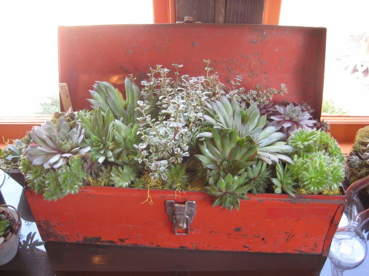 Succulent tillandsia arrangement - from this photo you can see that any old container can be used as a flower pot!!