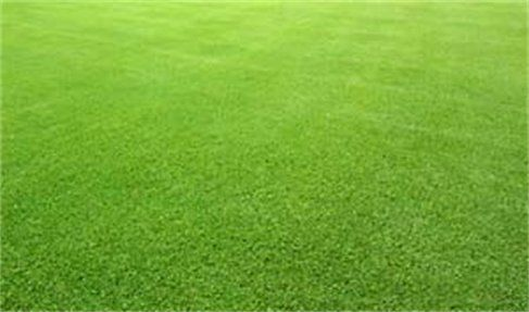 Bermuda grass is a very popular warm season grass. It grows very green and thick and spreads nicely. http://lawnenthusiast.com/2015/03/planting-bermuda-grass-seed/