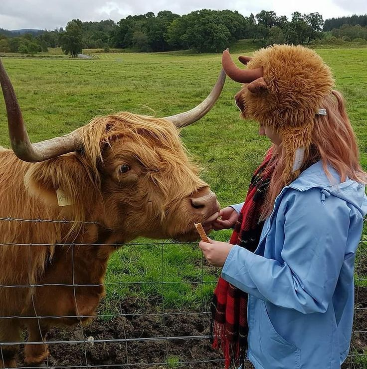 happy coosday from two coos to you  you would think that the highland cow is scotlands national animal but actually its a UNICORN  whats your countries national animal?