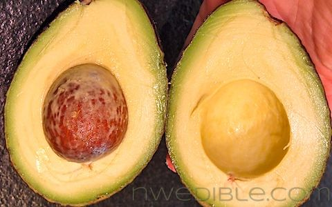 """Never Buy A Rotten Avocado Again"" -- great tips with good pictures: Avocado Again Here, Avocado Tricks, Avocado Ripe, Perfect Avocado, Avocado Handytip, Ripe Avocado, Avocado Yellow Green, Rotten Avocado, Smart Avocado"