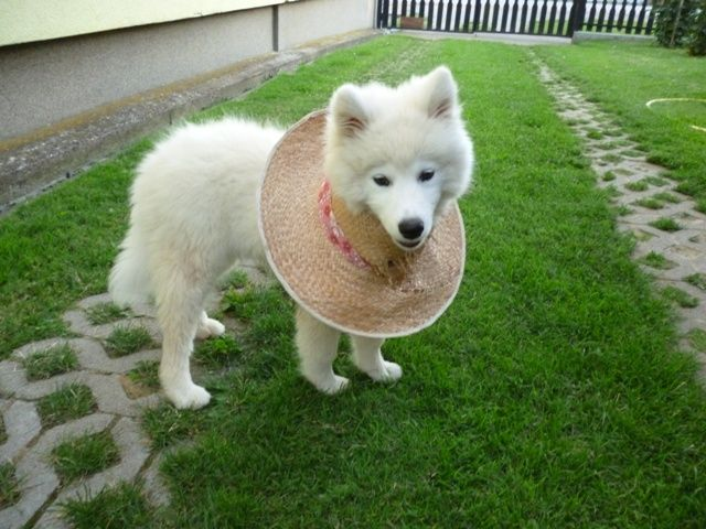 Mishka with the hat :D