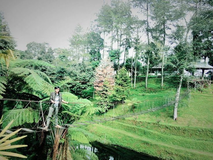 Pt.Pagilaran Tea Plantation Batang-Central Java