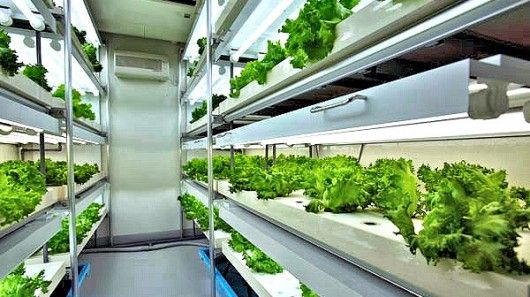 Agri-Cube grows mass quantities of vegetables in a one-car parking spot!   Bountiful harvest fills the trays of a Daiwa Agri-Cube prefab garden factory