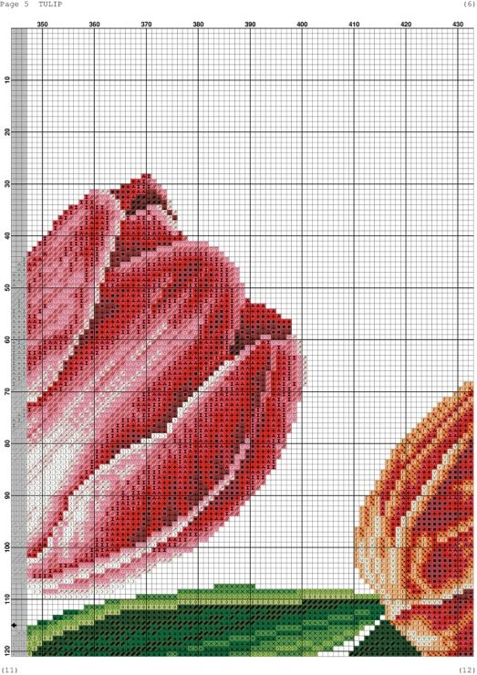 Tulips 7/14