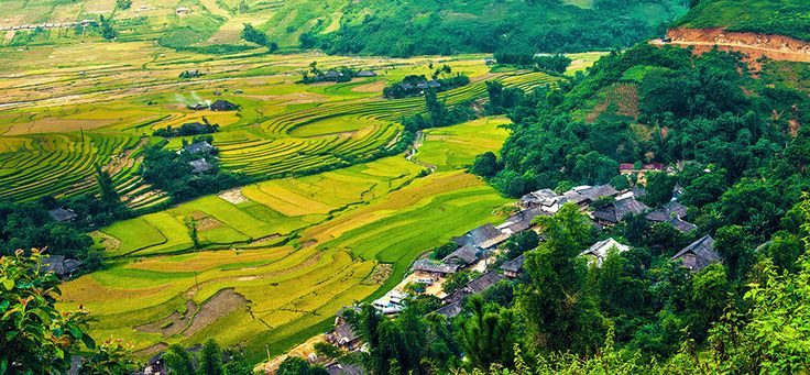 Rice fields in Yen Bai. #yenbai #vietnam #rice #field #travel #wandering