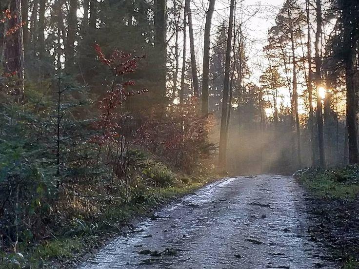 Sonnenschein nach dem Sturm Burglind. Im Wald ist wieder Ruhe eingekehrt.  #Naturmomente #Schwarzbubenland #Solothurn #Nunningen #Schweiz  #photooftheday #magicplaces #kraftorte #switzerland #switzerlandpictures #magicswitzerland  #nature #naturelovers #green #forest