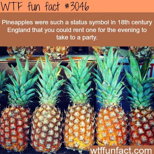 Rent a pineapple - WTF fun facts Pineappeles as a status symbol? Now all that old architecture makes sense, seeing in trim and carved in marble, topping fences, its wierd to think that a status symbol means so much for a generation or so, and as shipping becomes standardized and centuries later it's just a stylized piece of architecture