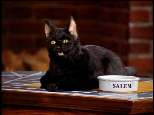 Ok he is not wearing a bow tie, but still love him -Greatest cat on television.: Sabrina, Film, Salem Saberhagen, Childhood Memories, Black Cats, Movie, 90S