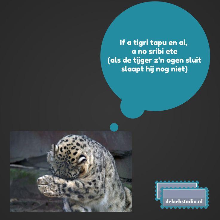 Inspiratie quote - Als de tijger zijn ogen sluit