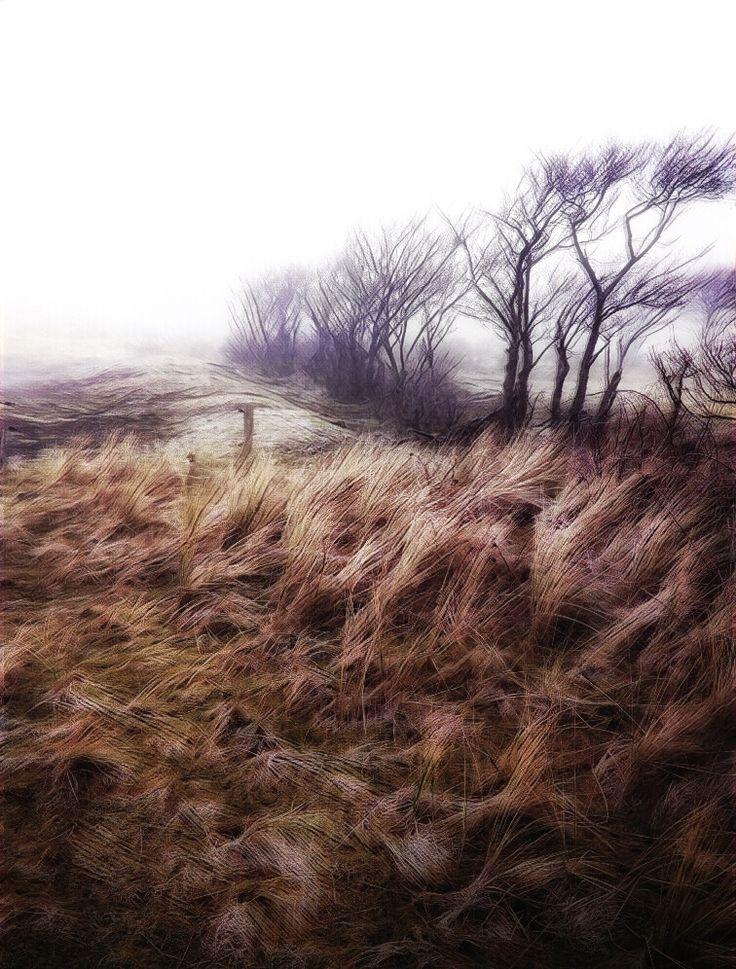 Dunes of Terschelling