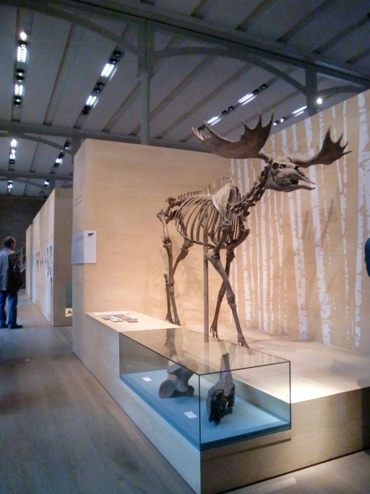 ベルリン博物館島三日間制覇!』 [ベルリン]のブログ・旅行記 by ... この博物館には、旧石器時代〜鉄器時代のベルリンを中心とした地域の遺物・化石も展示されています。