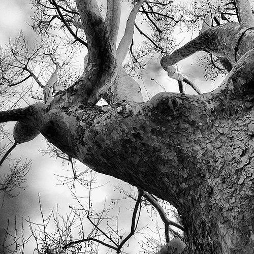 tree | by omaxi | photo lover