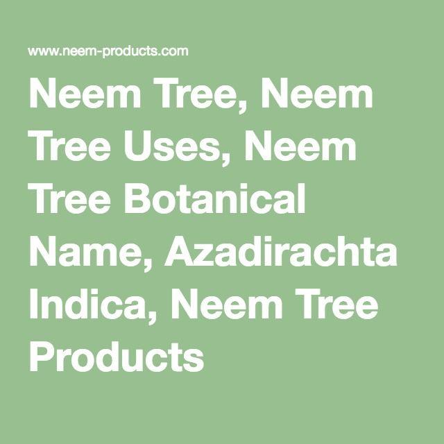 Neem Tree, Neem Tree Uses, Neem Tree Botanical Name, Azadirachta Indica, Neem Tree Products