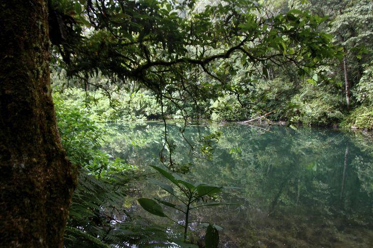 danau hijau- Gunung Gede Pangrango