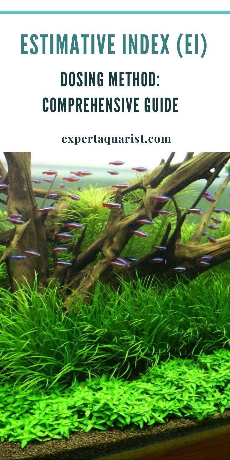 Ei Dosing Method For Planted Aquarium Comprehensive Guide In 2020 Planted Aquarium Freshwater Aquarium Plants Nano Aquarium