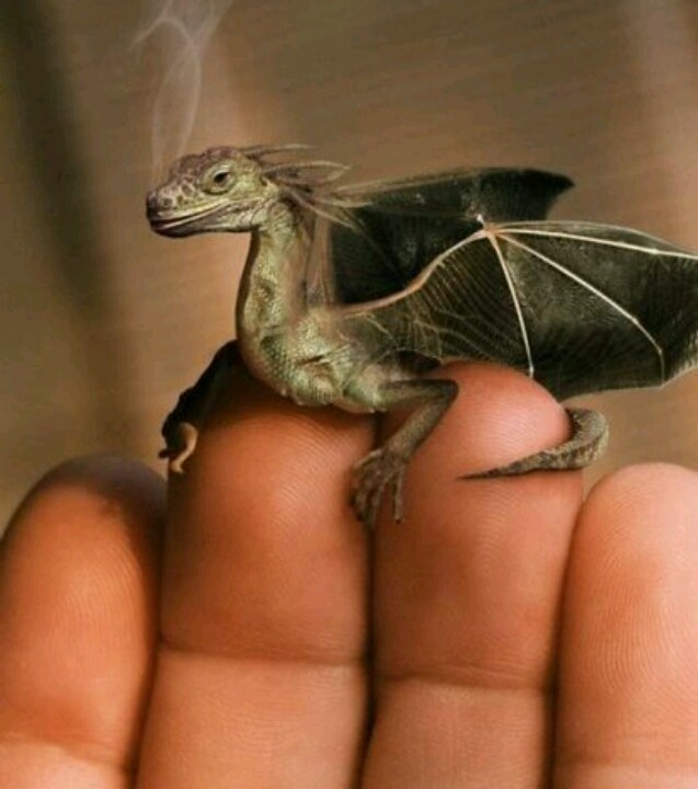 Is that smoke coming out of that dragon's nose? Do dragons exist?