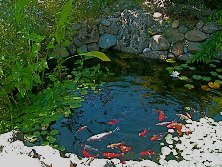 75 best images about turtle ponds on pinterest backyard for Outdoor goldfish pond ideas
