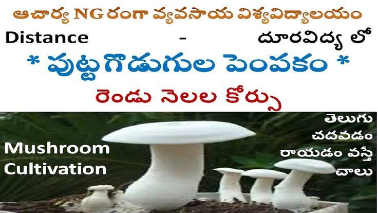 puttagodugula business in telugu mushroom business plan
