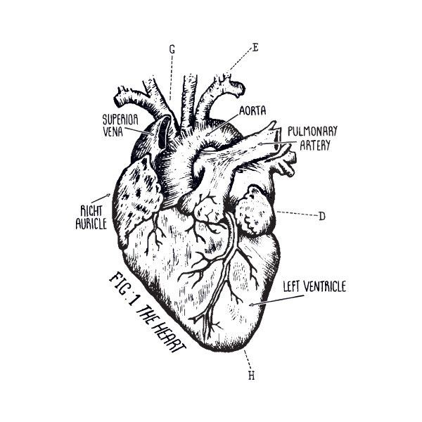 This Heart Chart by Peagreen Designs will keep your vitals up and your blood pumping.