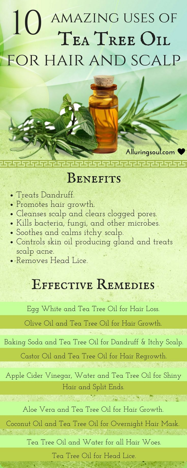 Tea tree oil for hair is considered as one of the best herb's oil to treat hair problems. It removes dandruff, promotes hair growth & has many more benefits.