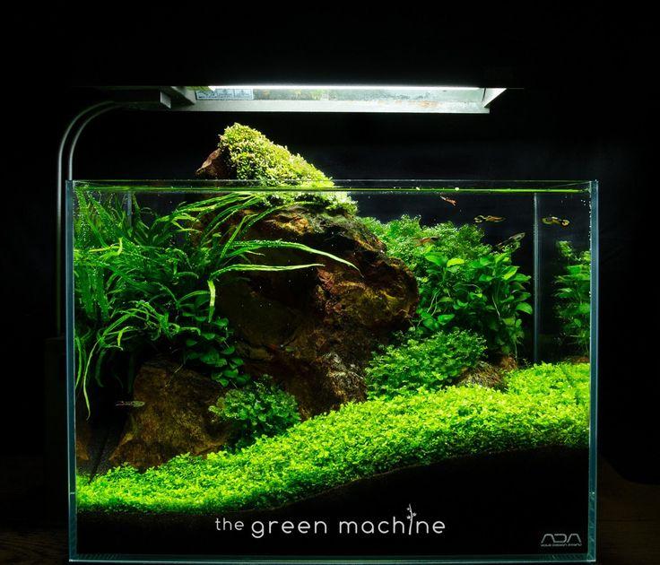 Red rock nano aquascape by james findley aquarium and for Cat proof fish tank