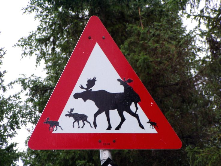 Today, Interesting road signs! Traffic signs, Signs, Norway