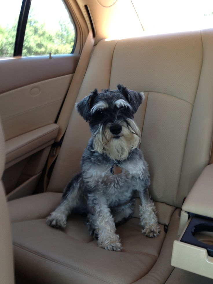 We have many clients who have taken service of shipping their pets from us.