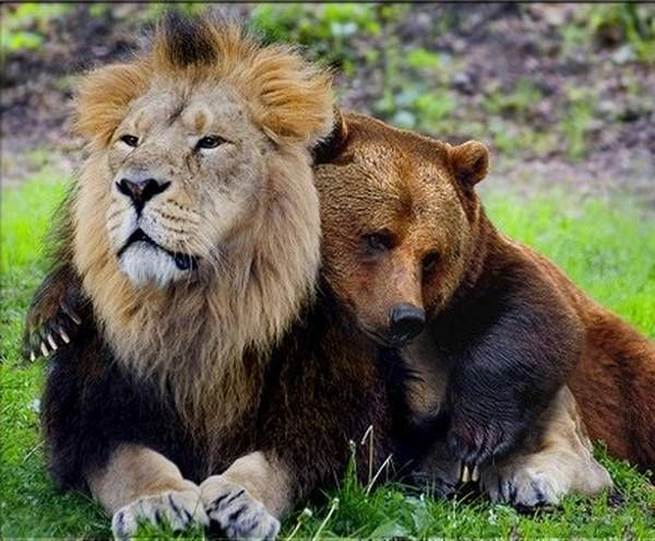 29 Unusual Animal Friendships That Will Make You Cry Inside