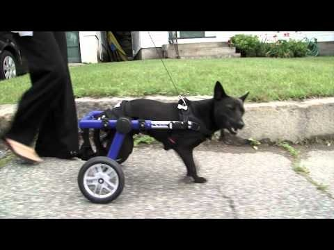 1000 ideas about purina pro plan puppy on pinterest pro