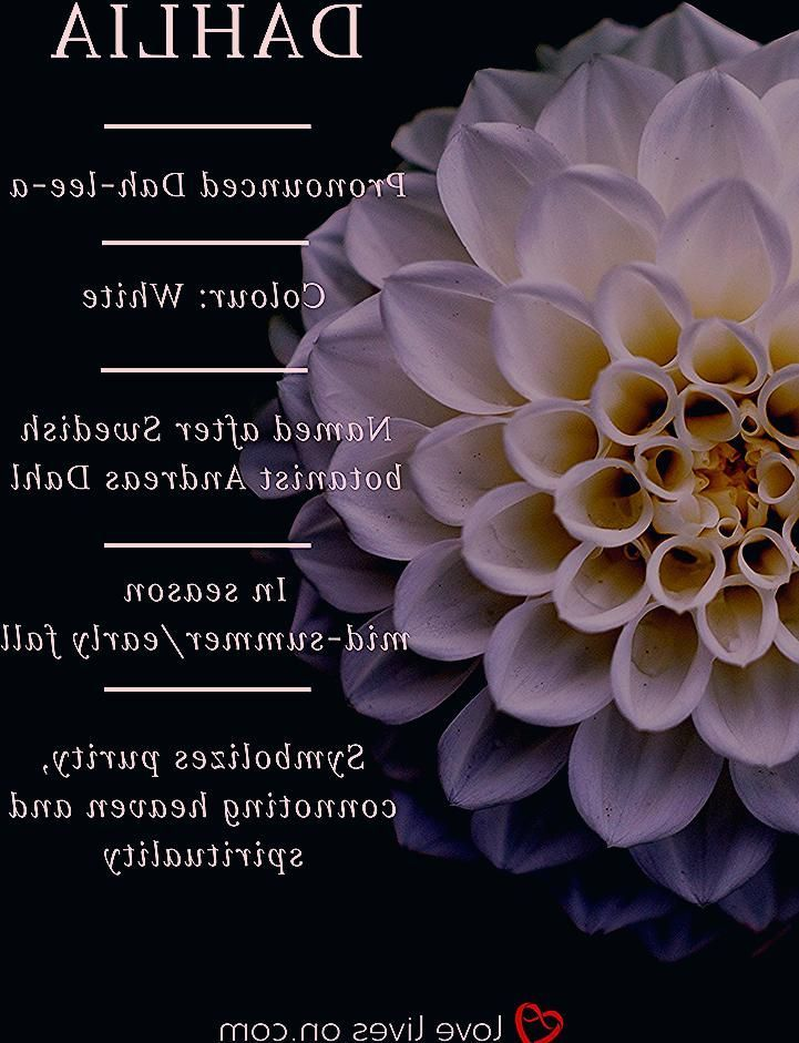 White Dahlia Meaning In Funeral Arrangements Or Sympathy Bouquets Click To Lear Arrangements Bouque In 2020 Sympathy Bouquets Funeral Flowers Funeral Arrangements