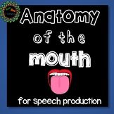 Anatomy of the mouth and tongue for speech articulation th