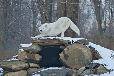 Atka's Wolf Den