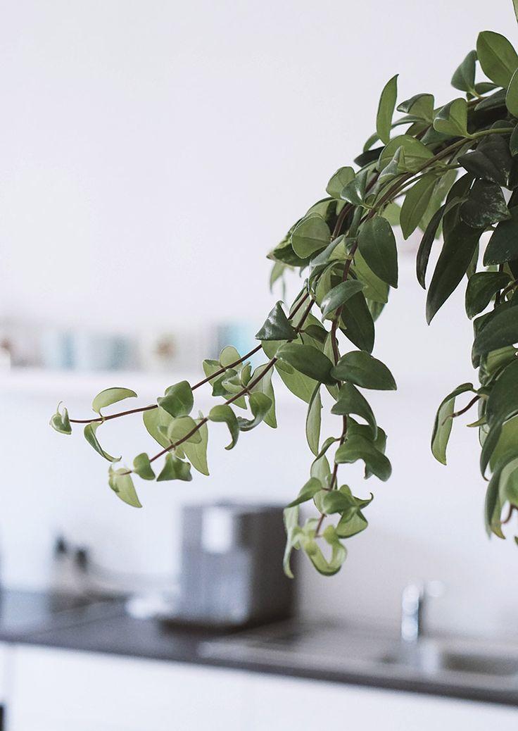 die besten 25 pflanzen f rs b ro ideen auf pinterest schreibtisch pflanze pflanzkalender und. Black Bedroom Furniture Sets. Home Design Ideas