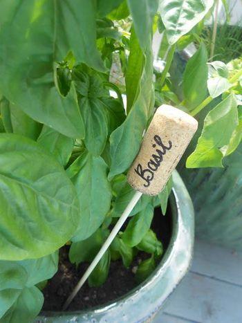 小さい穴にしたら棒をさして、プラントマーカーに。よくみるプラスチックの札よりも、こちらの方が植物に溶け込んでいるように見えますね。