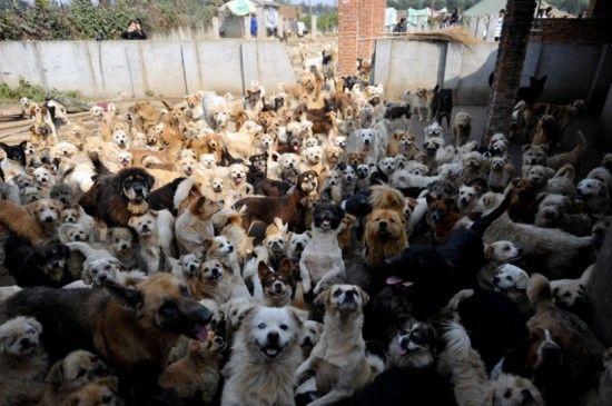 Приют для животных (15 фото)