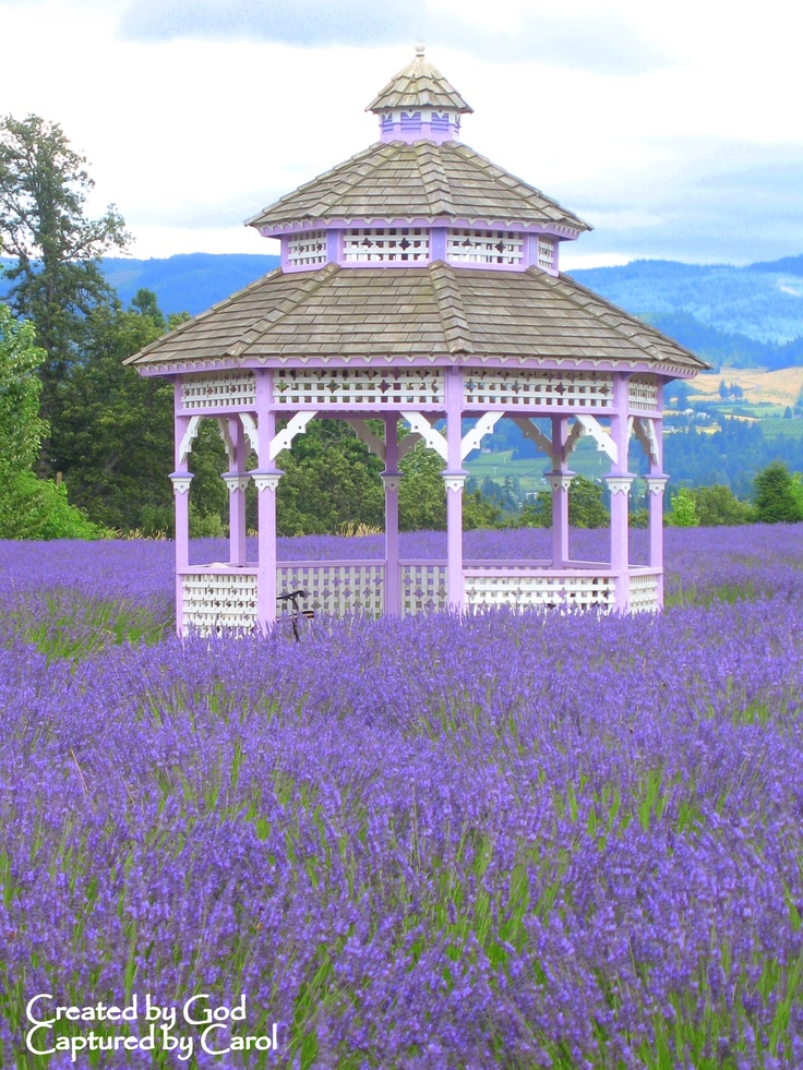 Lavender Field in Hood River, OR