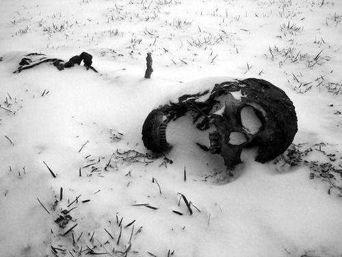 Skull in the snow.