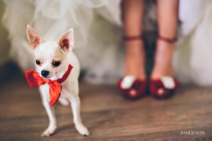 By George Pahountis   wedding photographer greece