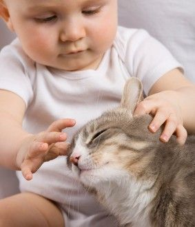 Prepare Your Cat For the Arrival of Your New Baby - best advice I've seen!