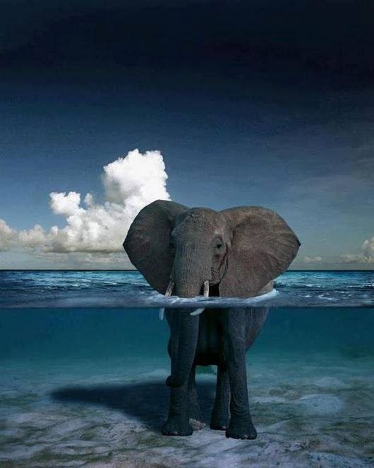 An Elephant Standing in The Ocean off The Coast of Africa. - Wonderful World - Google+