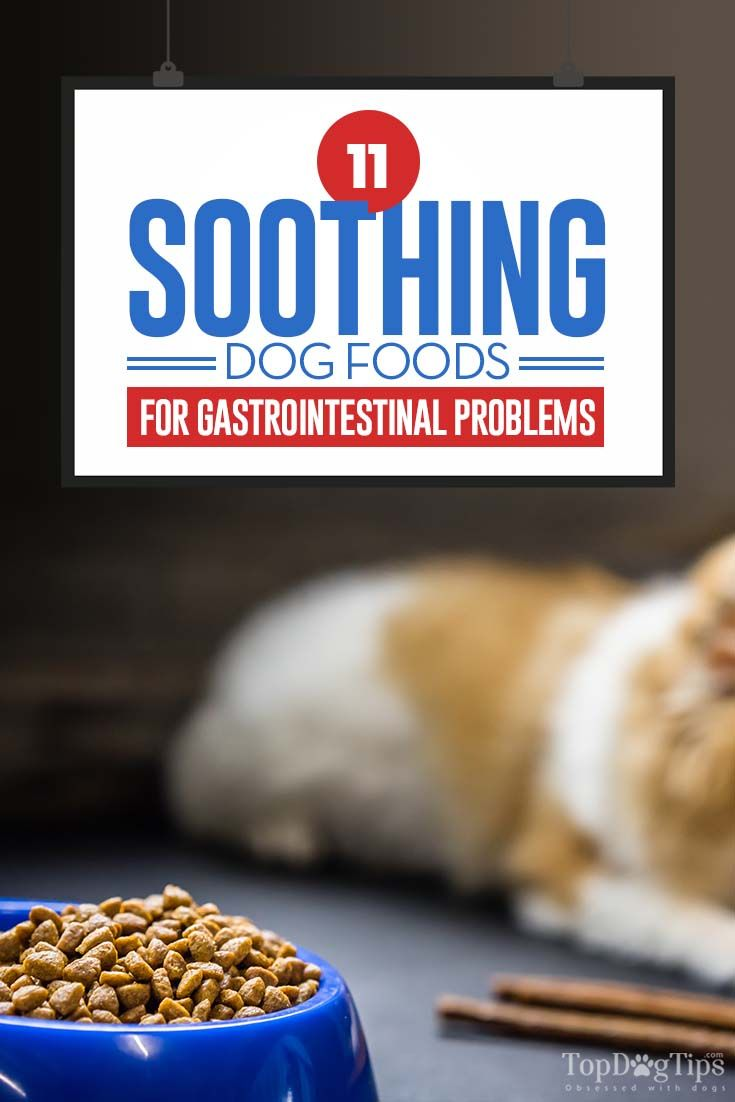 11 Best Foods For Dog S Gastrointestinal Problems Best Dog Food
