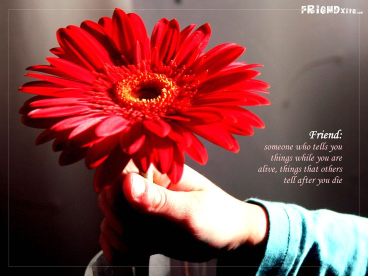 Flowers Wallpapers With Friendship Quotes