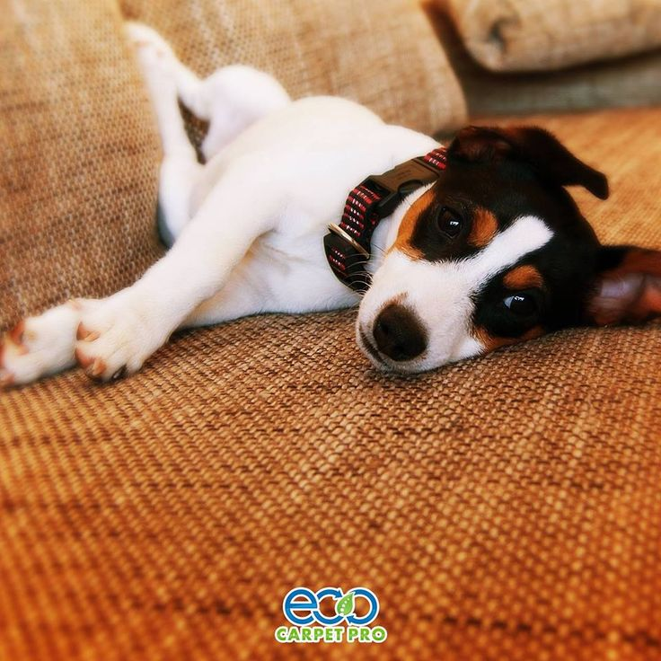 """What do you mean get off the couch? Just call Eco Carpet Pro!""  Learn more: http://bit.ly/1OI4uYj"