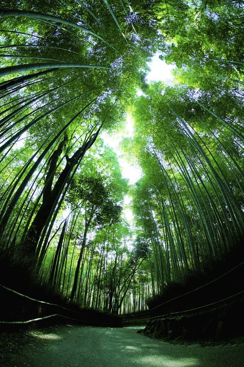嵐山 Kyoto, Japan via αcafe | My Sony Club | ソニー #Kyoto #Green #緑