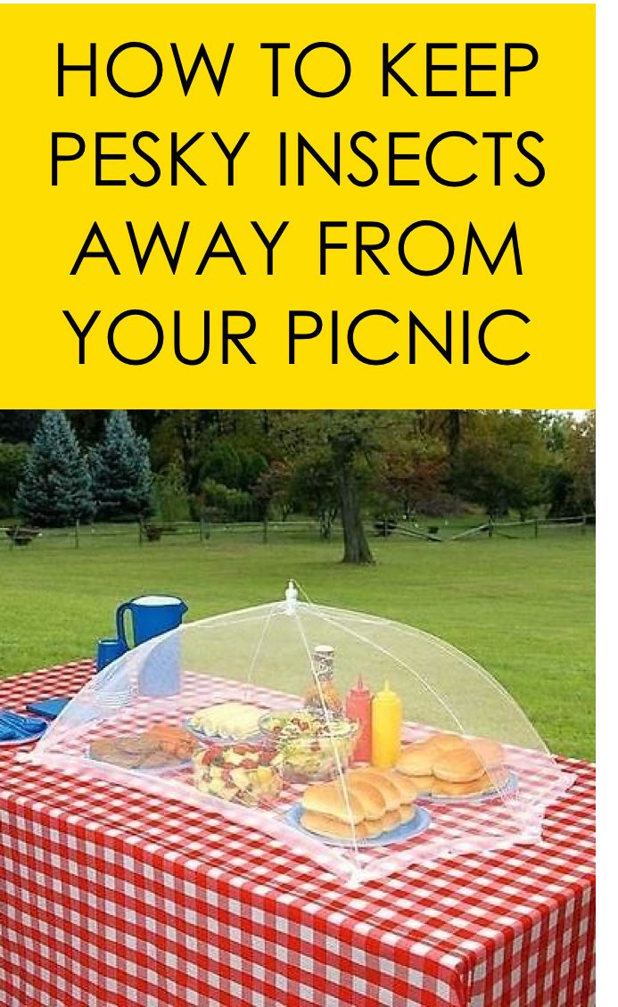 how to keep wasps away from picnic