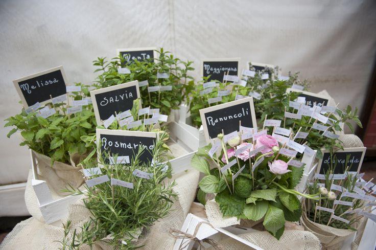 il tableau di piante aromatiche