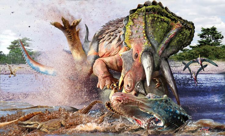 One Split Second: Triceratops Vs. Tyrannosaurus Rex  The T-Rex probably preyed on Triceratops, because their territories overlapped 65 million years ago. While the T-Rex had its famous bite to use for a weapon, triceratops' powerful horns were a formidable defense.