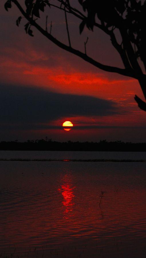 Nascer do sol no Santuário da Vida Selvagem Árvore Torta em Belize. Fotografia:  Ben Forsyth no Flickr.