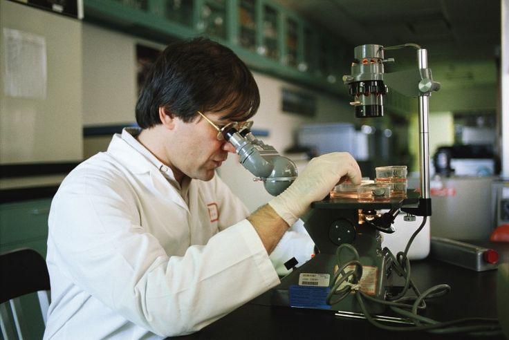 Crean tejidos humanos dentro del estómago con células madre  - http://notimundo.com.mx/salud/crean-tejidos-humanos-dentro-del-estomago-con-celulas-madre/21539