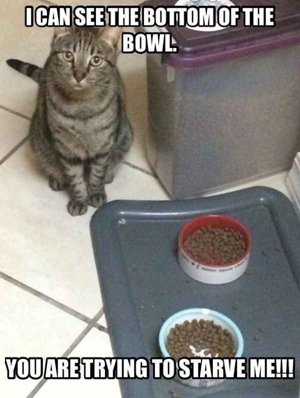 "My sister's cat Dr. Phil would do this.  He would go to everyone begging them to come look at his poor ""empty bowl.""  He was a riot!"